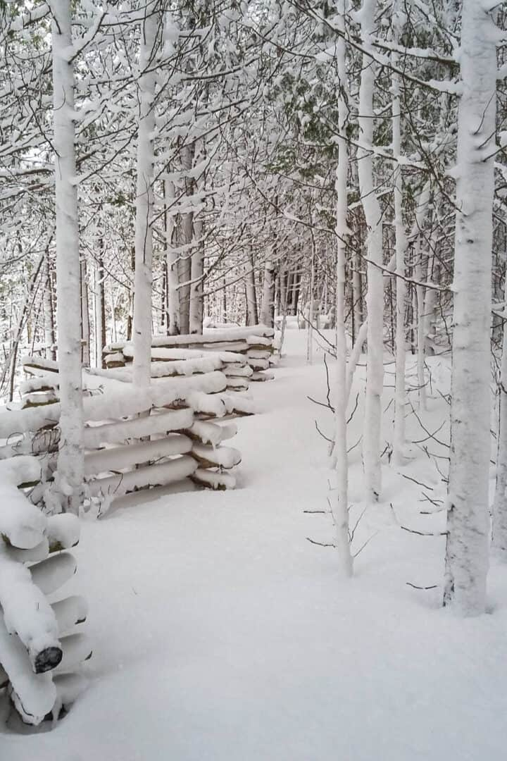 rail fence in forest, all covered in white snow